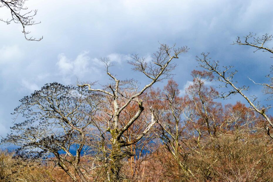 Dried trees and grass against a gloomy sky