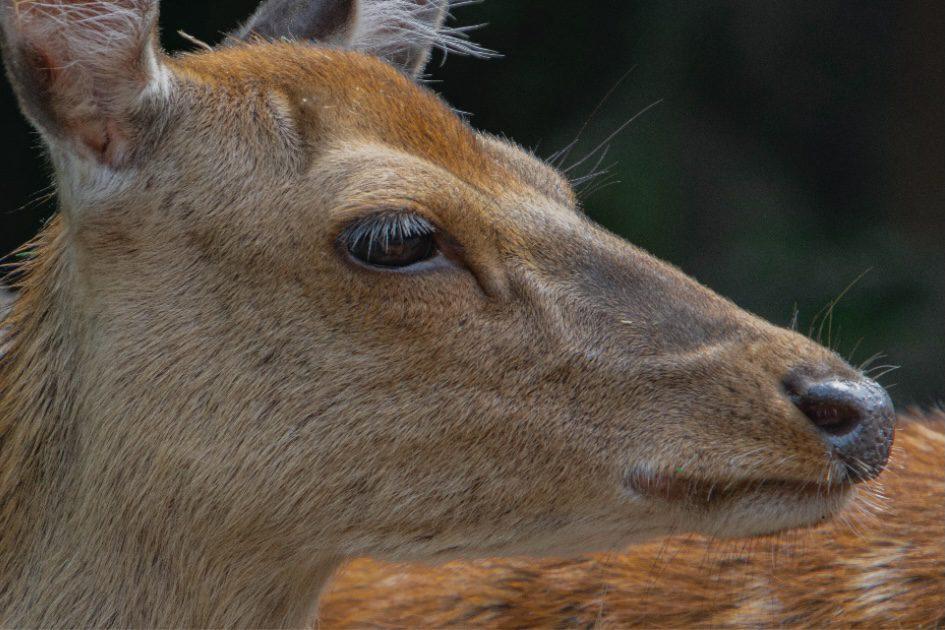 a deer looking around it's surroundings